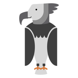 Harpy eagle bird illustration