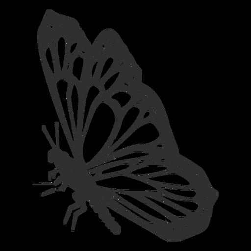Monarch butterfly still silhouette