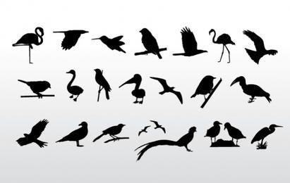 Vögel-Sammlung