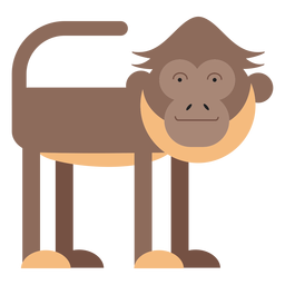 Spider monkey illustration