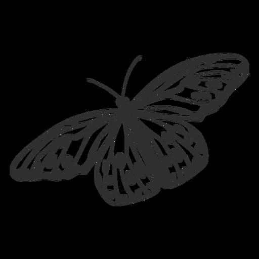 Silueta de mariposa ninfa de árbol Transparent PNG