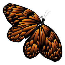 Butterfly in flight icon butterfly