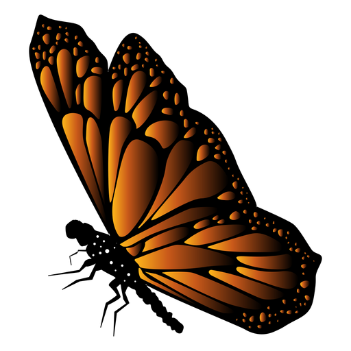 Detailed butterfly vector Transparent PNG