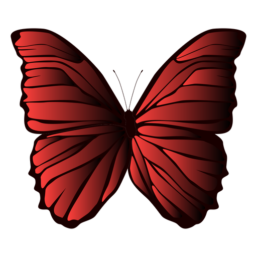 Lined wings butterfly Transparent PNG