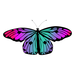 Multicolored butterfly design