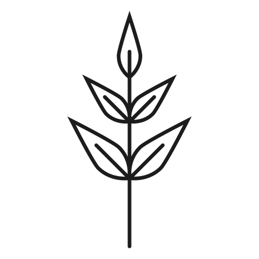 Subulate leaves icon Transparent PNG