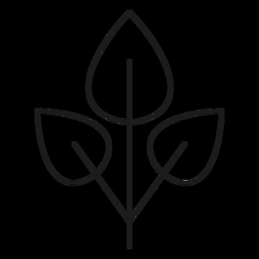 Tres hojas en un icono de rama. Transparent PNG