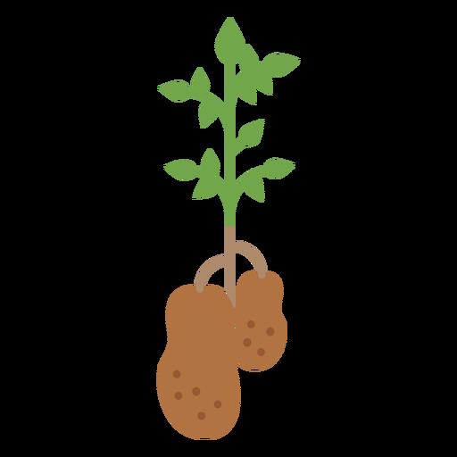 Elemento de diseño de planta de papas Transparent PNG