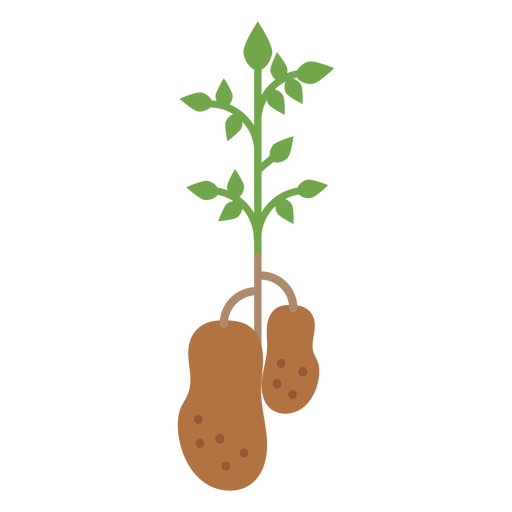 Potatoes plant design element Transparent PNG