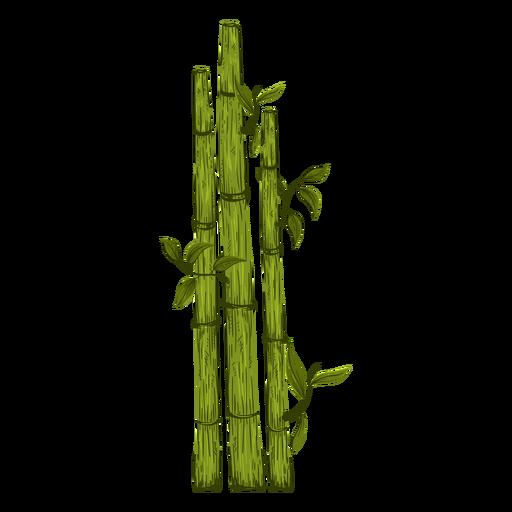 Ilustración de planta de bambú Transparent PNG