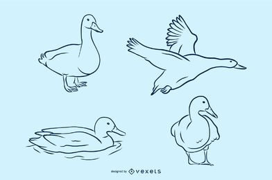 Duck Vector Illustration Set