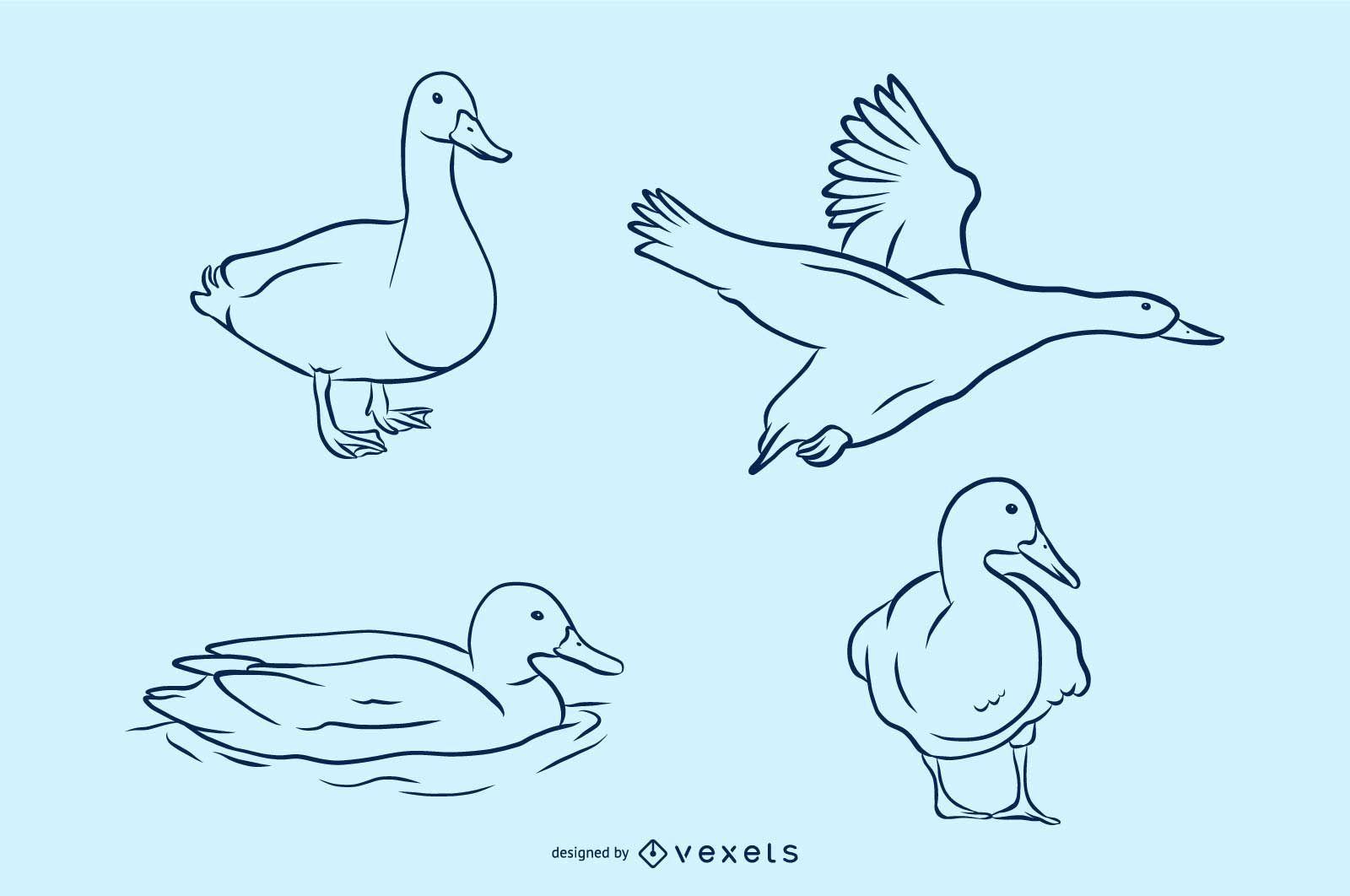 Conjunto de ilustración de vector de pato