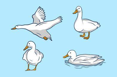 Conjunto de ilustração de pato branco