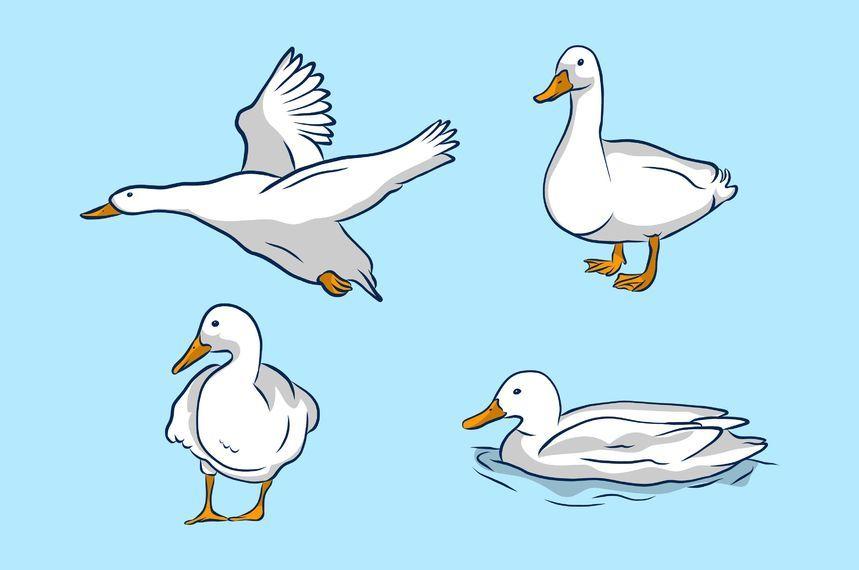 White Duck Illustration Set