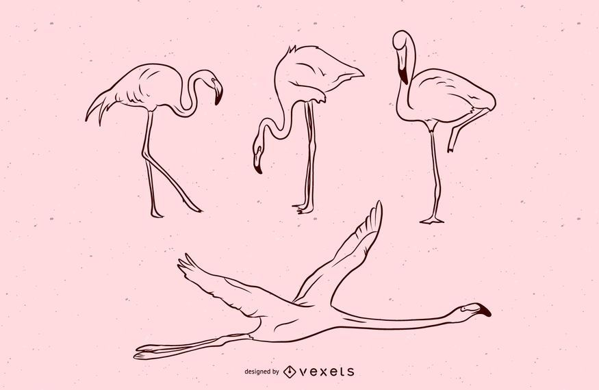 Flamingo Stroke Illustration Set