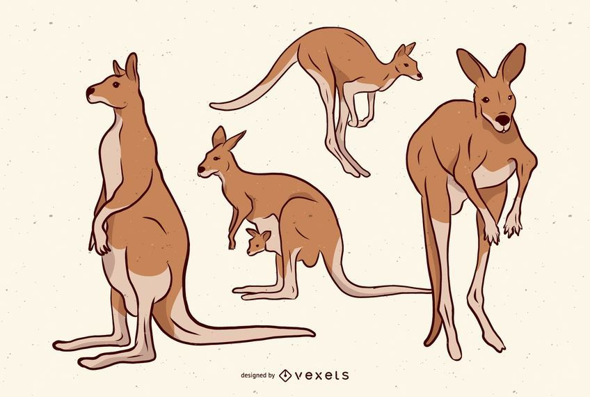 Brown Kangaroo Illustration Set