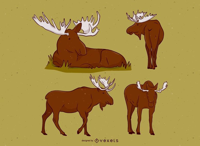 Moose Animal Illustration Set