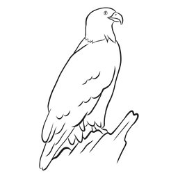 Bald eagle sketch vector