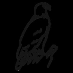 Vector de bosquejo de águila calva