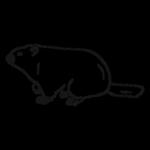 Vetor de esboço de vista lateral de marmota Transparent PNG