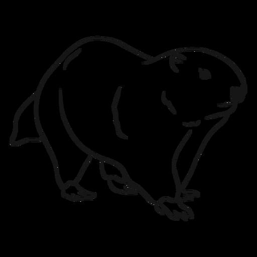Ilustração do esboço de marmota Transparent PNG