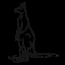 Canguru em pé desenho vetorial