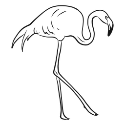 Hohe Flamingoskizze