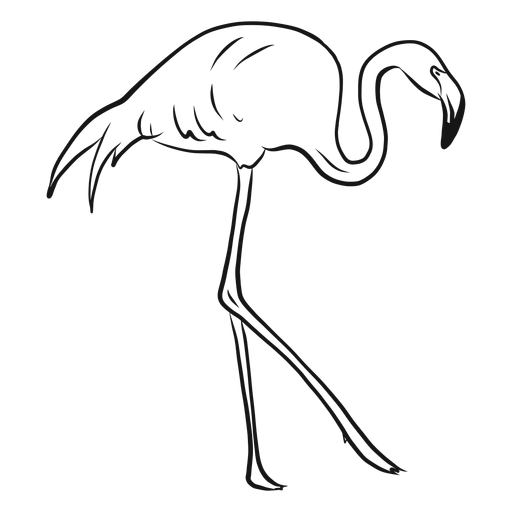 Dibujo de flamenco caminando alto Transparent PNG