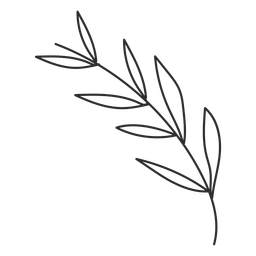 Zweig Blatt Skizze