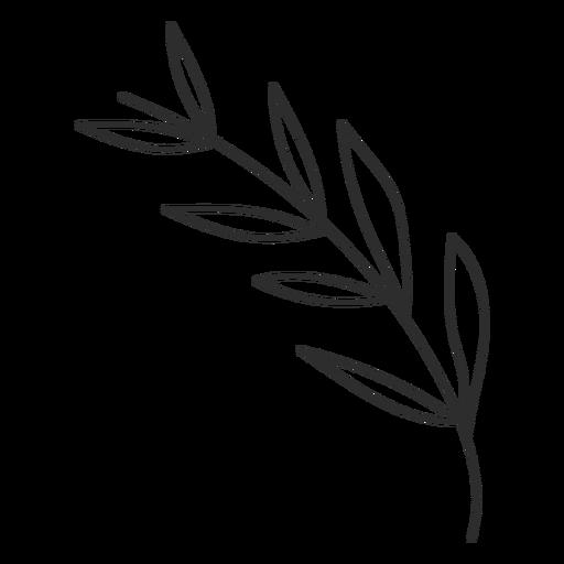 Esboço de folha de ramo Transparent PNG