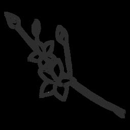 Boceto de rama