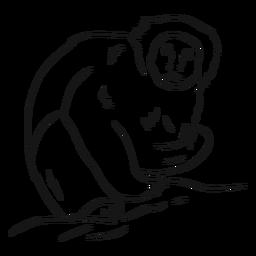 Capuchin monkey leg sketch