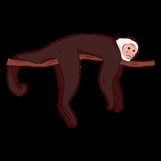 Ilustração de ramo de cauda de perna de macaco-prego Transparent PNG