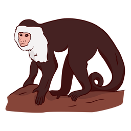 Capuchin monkey leg tail illustration
