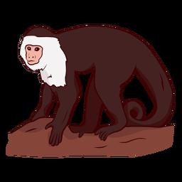 Capuchin monkey leg tail illustration