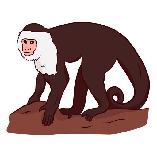 Capuchin monkey leg tail illustration Transparent PNG