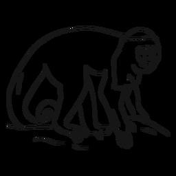 Kapuzineraffenbein-Schwanzskizze