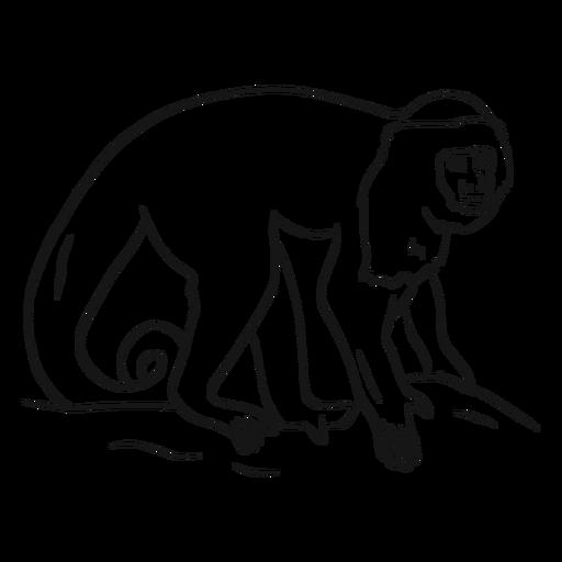 Dibujo de cola de pata de mono capuchino
