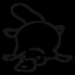 Pato de pato platypus pico cola cola sketch