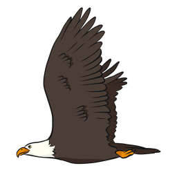 Eagle beak wing tail illustration