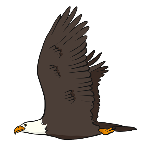 Eagle beak wing tail illustration Transparent PNG