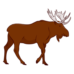 Elk moose antler hoof illustration