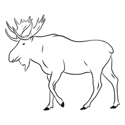 Elk moose antler hoof sketch