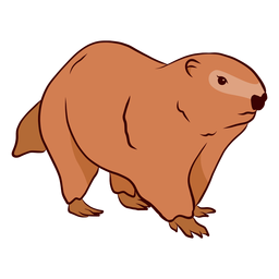 Ground hog marmot muzzle illustration