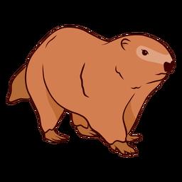 Ground hog marmot muzzle illustration