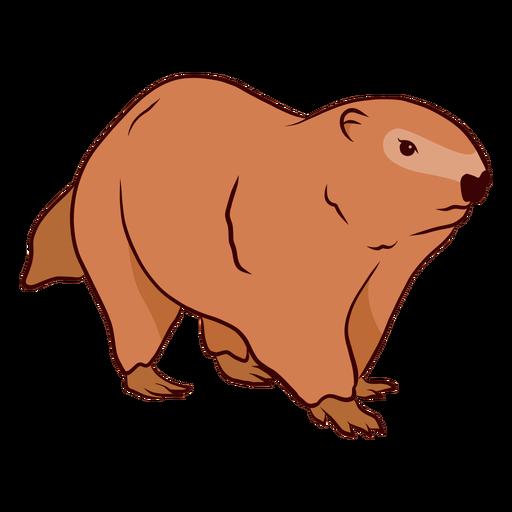 Ground hog marmot muzzle illustration Transparent PNG