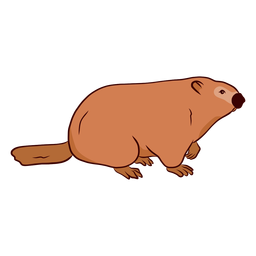 Ground hog marmot muzzle tail illustration