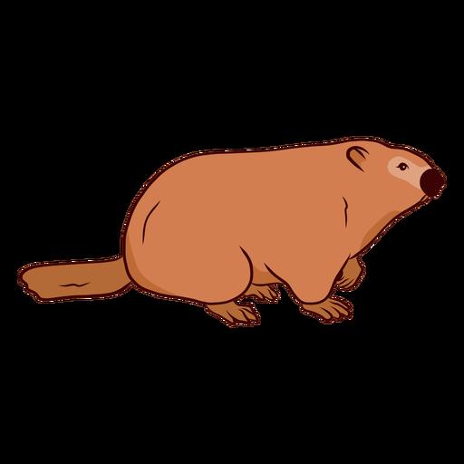 Ilustração de cauda de focinho de marmota de porco à terra Transparent PNG
