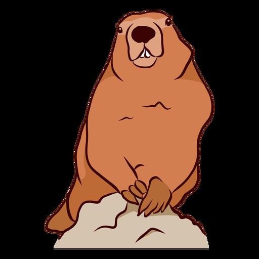 Ilustração do dente do focinho da marmota de porco à terra Transparent PNG