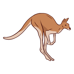 Kangaroo tail leg illustration